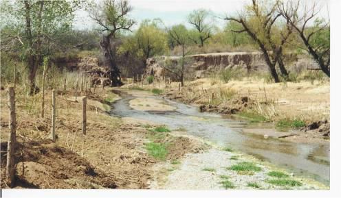 San Bernadino - Pole Plantings Downstream of Gabions