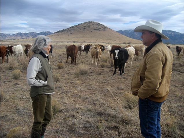 Evaluating cows health