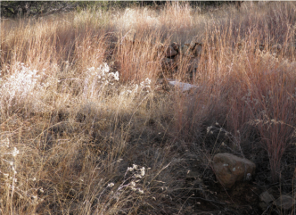 Same location with regrowth of grasses